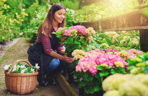 Meer kleur in je tuin